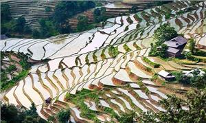 Ngắm ruộng bậc thang Sapa mùa nước đổ